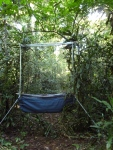 """The Francis"" four-bank forest harp trap on its first African Adventure."