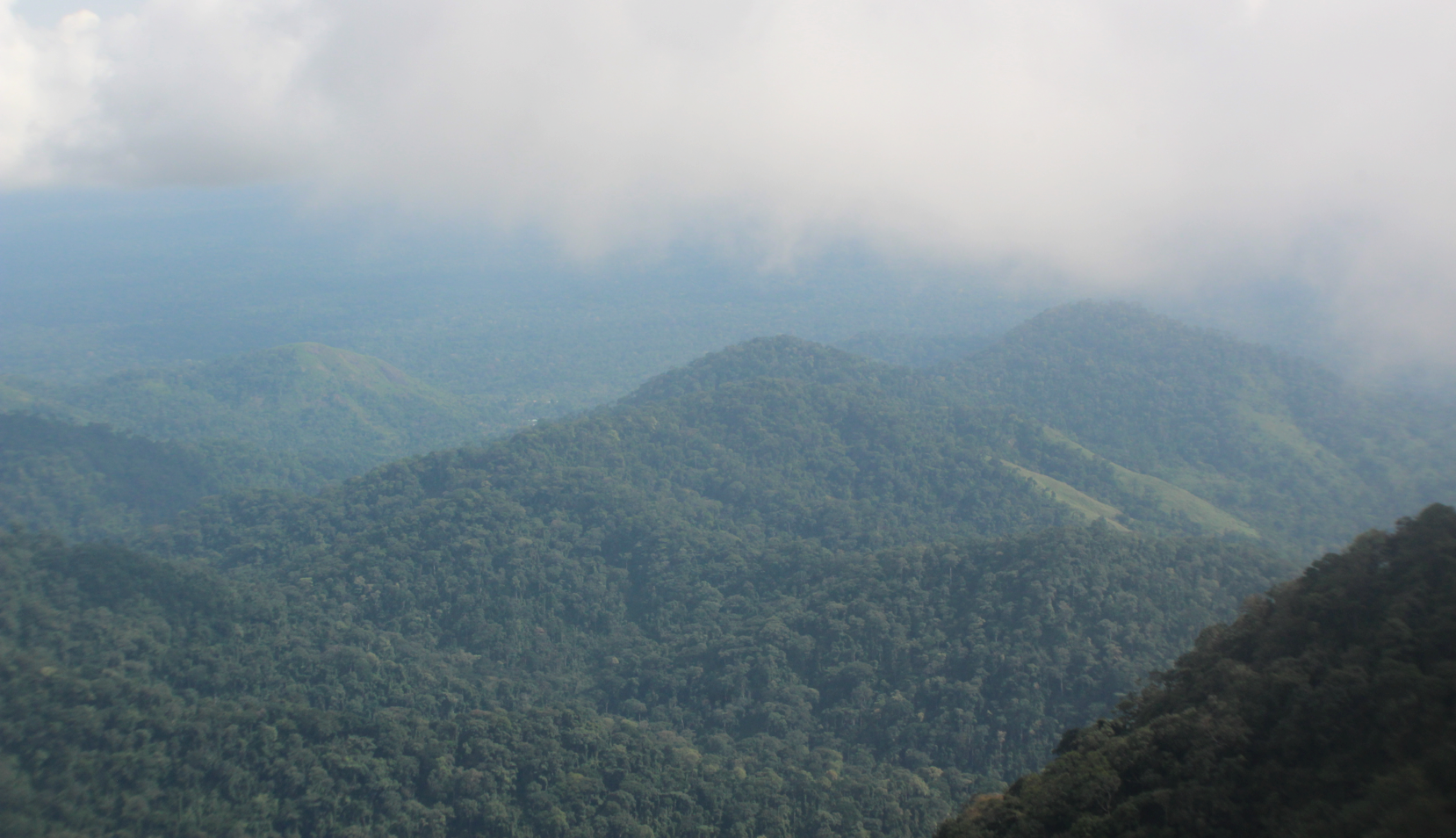 Some of the low-lying peaks at Afi Mountain Wildlife Sanctuary